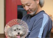 術後の犬を見守る院長