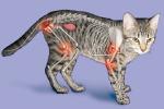 猫の関節炎の説明