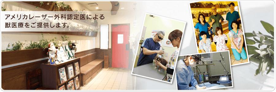 アメリカレーザー外科認定医による獣医療をご提供します